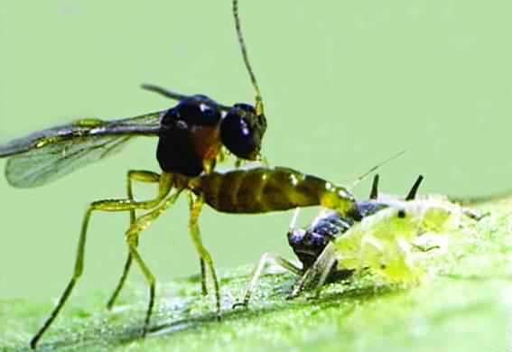 bioprotectants_20060906.jpg