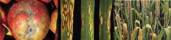 Mykologie2.jpg